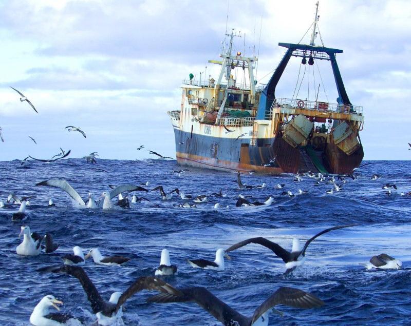 рыболовные суда реферат